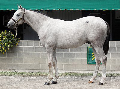 Juba as a yearling at Keeneland. Photo courtesy of Centennial Farms